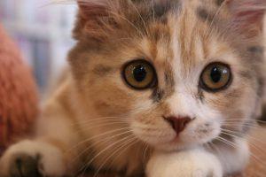 家の中で繰り広げられる猫の運動会を止めさせたい!3つのしつけポイント