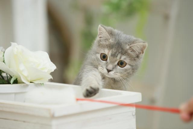 またしてる、、猫がソファで爪とぎをする原因と対策