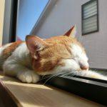 猫のしつけで一番いいり方・怒り方を知ってますか?