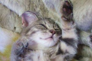 子猫のしつけが重要!最初にやるべき3つのしつけ