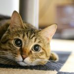 猫の困った噛み癖を直すための3つの方法