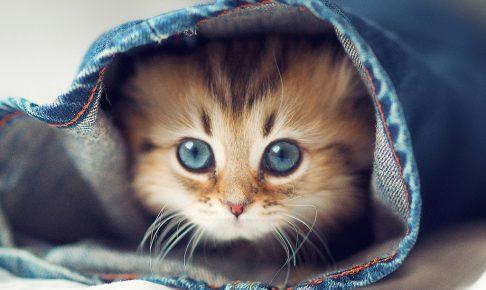 猫に寝床をしつけよう!自由気ままな猫でも大丈夫な3つのコツ