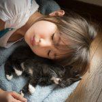 一人暮らしにおすすめ飼いやすい猫種ベスト5
