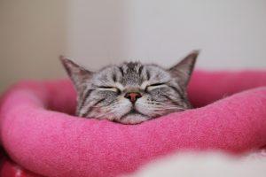 一人暮らしで猫を飼うために知っておく5つのポイント