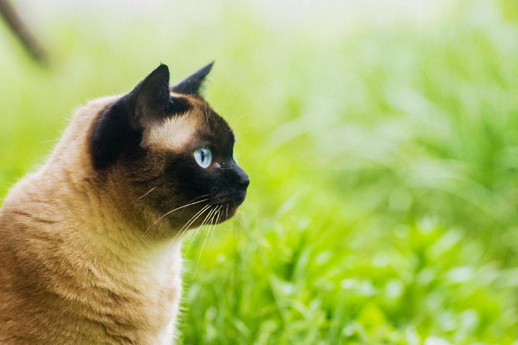 草原と猫の横顔