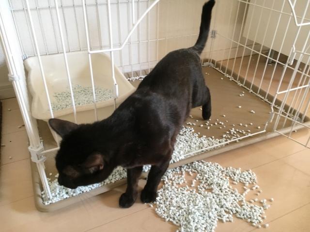 猫を飼うのに必要な飼育環境はどうすればいいの?