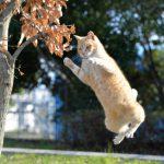 水遊び癖ありませんか?止めさせたい猫の水遊び癖への3つのしつけ対策