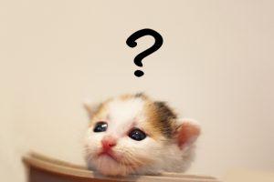初めて猫を飼うのにおすすめの本ありますか?