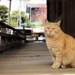 猫を飼っても旅行に行ける?最新ペットホテル事情