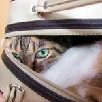 猫のしつけのポイント!猫が嫌いな音があるって知ってた?