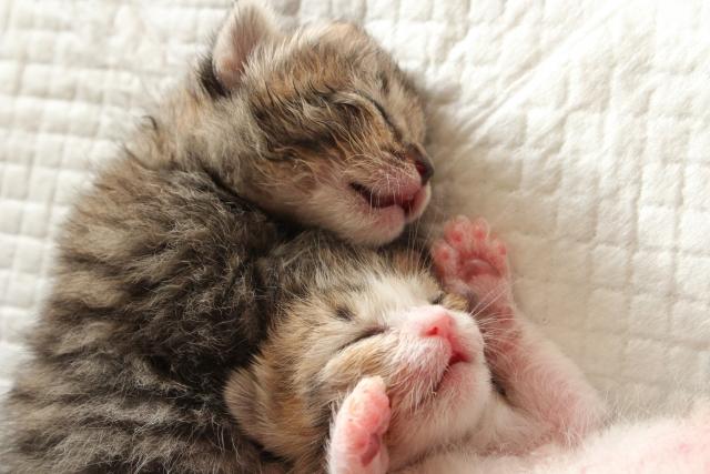 猫を飼うきっかけ。みんなどうやって愛猫と出会いましたか?