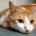 猫が抱っこを嫌がる理由を知ってますか?猫を抱っこしたい人が知るべき3つのこと