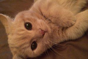 一人暮らしでペットを飼いたい!犬と猫はどちらがおすすめ?