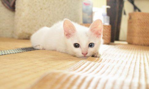 猫のしつけで部屋に閉じ込めてはいけない3つの理由