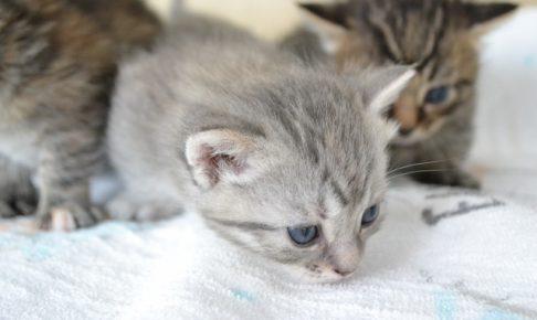 子猫のしつけ開始時期のベストタイミングと5つのポイント!
