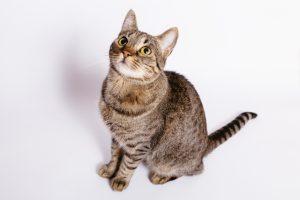 飼い猫を呼んだら来てほしい!猫に「おいで」をしつける3つのコツ