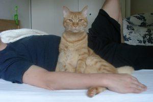 飼い猫にストレスを与えてませんか?その原因と対策とは