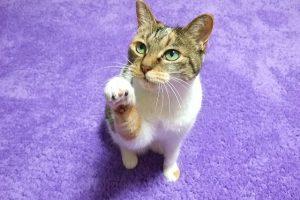 猫をしつける3つのコツ教えます!今日から実践できるしつけとは