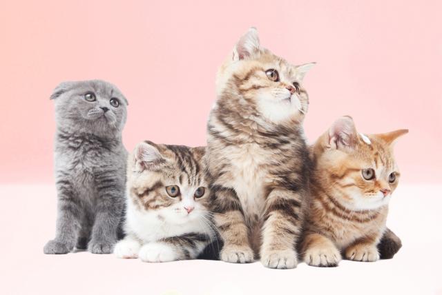気を付けてね!生後3ヶ月の子猫のしつけのポイント