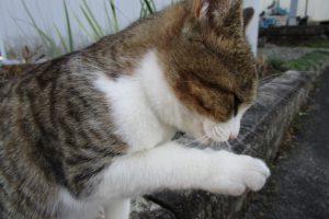猫のための手作りご飯!あげて良い食材とダメな食材