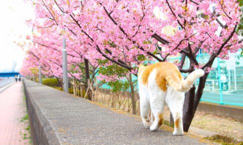 猫をしつけて一緒に散歩させたいと思った時に知るべき3つの注意点