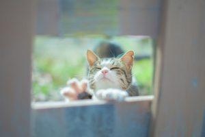猫をしつける時に叩いてはいけない3つの理由
