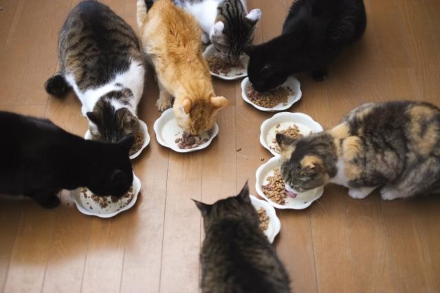 心配?!猫が食事をあまり噛まないのは大丈夫なの?