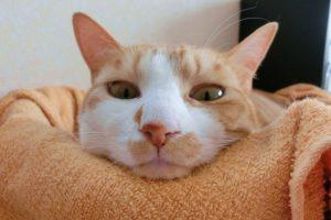 猫が食べやすいフードボウルや器はどんなもの?