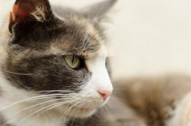 外に出たがる猫を上手にしつける3つのポイント