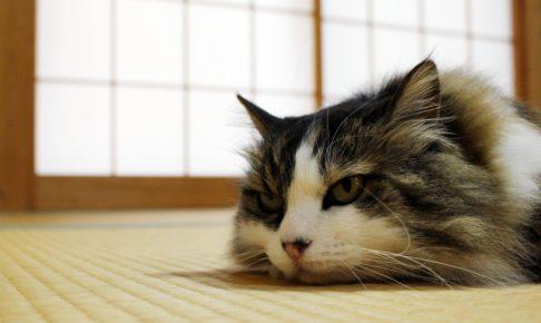 屋内で猫を飼う時の臭い対策ベスト3