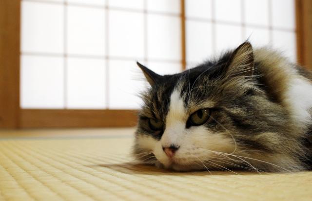 猫と快適に暮らすインテリアの作り方と31の具体的 …