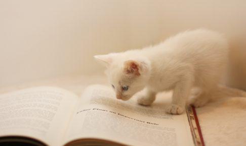 我慢の限界!飼い猫の鳴き声がうるさくなった時の3つのしつけ方法
