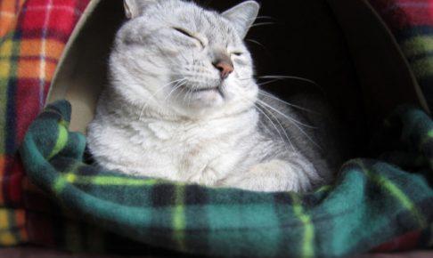 量が多い?猫がキャットフードを残してしまう理由と対策