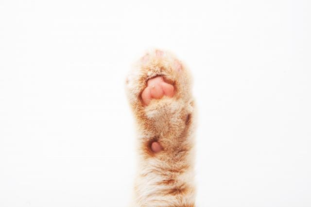猫を飼うことで良い意味で得られた3つの事