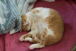 猫が問題行動を起こす原因とそのしつけ対策とは