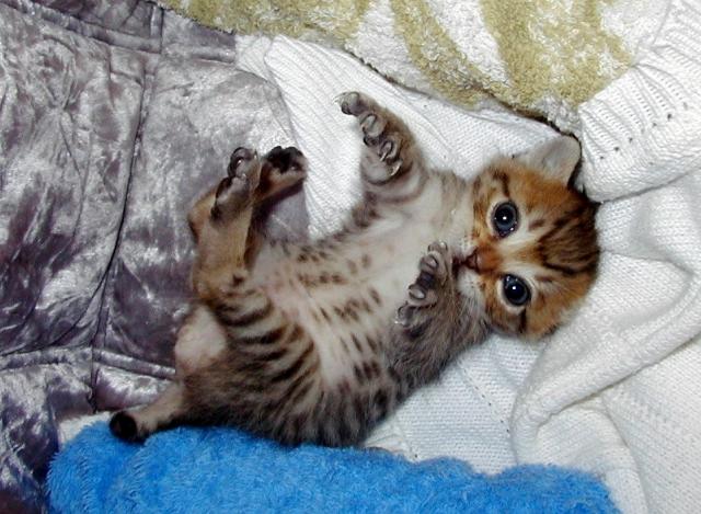家中ボロボロになる前に!猫の爪とぎのしつけ方法3つのポイント