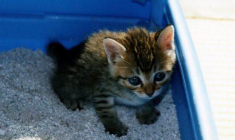 重要!猫が布団におしっこをさせないための原因としつけ対策