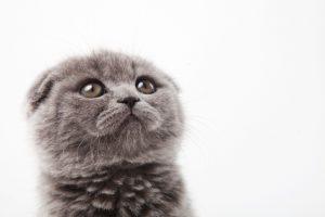 その甘噛みは本気噛み?猫の甘噛みをしつける方法