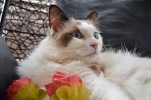 猫のしつけは難しい?知っておくべき猫の6つの生態と習性
