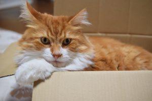 もう傷だらけ!猫が飼い主の手足をひっかく原因と対策