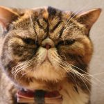 芸をする猫になれるかも!猫に「お手」を覚えさせるしつけ方法まとめ