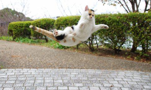 暴れる猫を上手くしつけるための3つのポイント