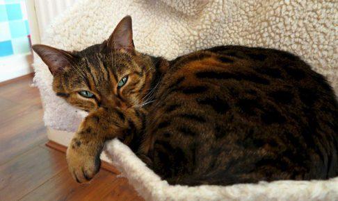 猫アレルギーだけど猫が飼いたい!飼っても大丈夫?原因と対策を教えて。