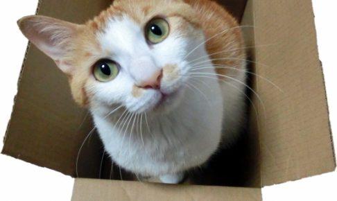 猫の飼い方!はじめて飼う人が知るべき3つのポイント