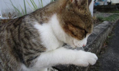 ストレスなのかも?猫の異常な毛づくろいの原因と対策