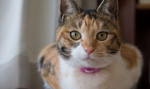 気を付けてます?猫のマウンティングの理由としつけ対策