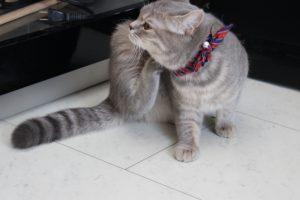 猫にも「おすわり」をしつけられる?おすわりを教える方法
