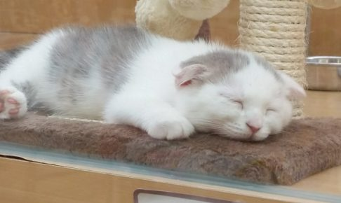 猫の留守番にエアコンはどうすればいいの?暑さ対策まとめ