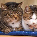 猫の多頭飼いメリットとデメリットを教えて
