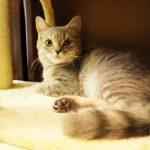 厳しいばかりはNG!猫のしつけは上手く出来た時の「おやつ」の与え方が重要